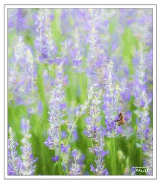 Lavender Impression 01